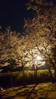 桜満開 Part3